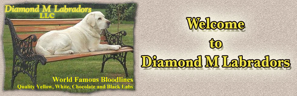 Diamond M Labradors -Texas, Oklahoma, Arkansas, New Mexico